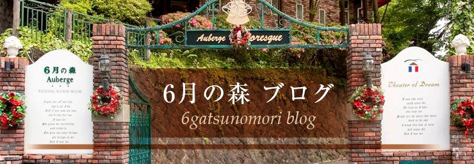 6月の森 ブログ